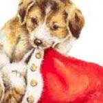 weihnachtspakete_Hunde